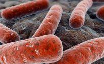 Recreación de la bacteria Mycobacterium tuberculosis que causa la infección pulmonar  (Foto. CSIC Archivo)