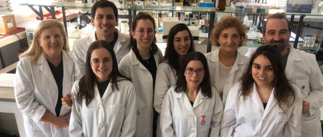 Investigadores del Cibercv y la Universidad Complutense de Madrid demuestran en modelos animales que el tratamiento con antioxidante mitocondrial (MitoQ) frena la fibrosis cardiaca en pacientes obesos (Foto: Cibercv)