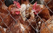 La seguridad alimentaria, en entredicho en la UE por la crisis de los huevos contaminados
