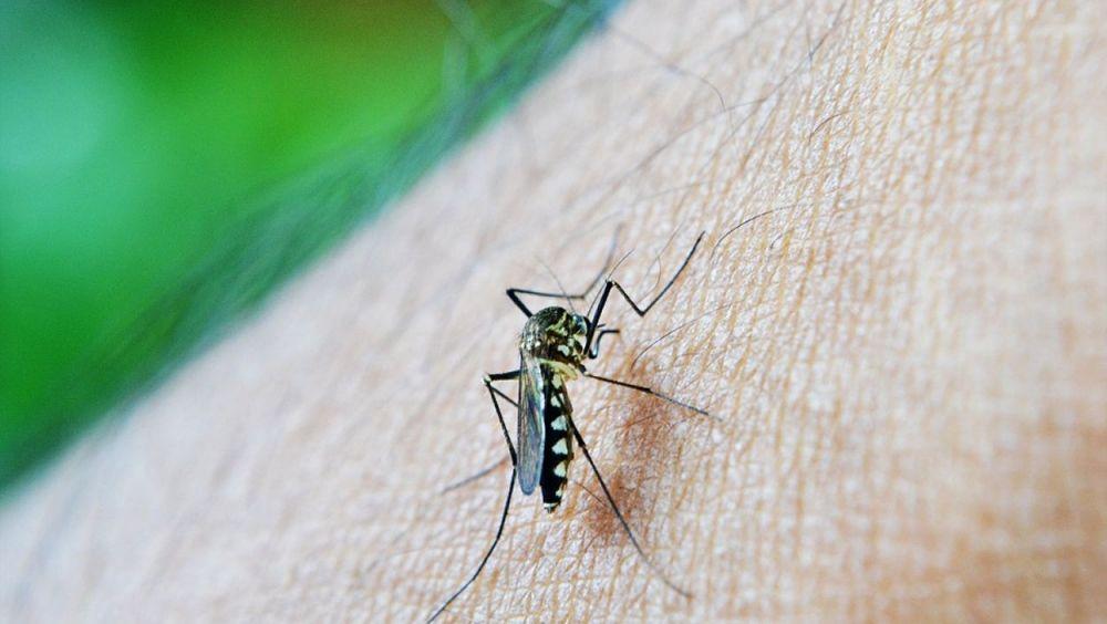 La malaria es una enfermedad provocada por la picadura del mosquito anófeles y endémica en varios países africanos.