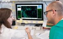 Los investigadores proponen llegar a utilizar estas moléculas y la meticilina de forma combinada en el tratamiento de las infecciones invasivas por superbacterias.
