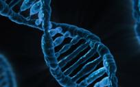 Se espera que esta investigación tenga un impacto importante en trabajos posteriores en los campos de la nutrición, la genética y la medicina