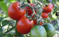 Glifosato, el pesticida de la discordia