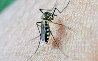 Problemas del Zika a los dos años de edad