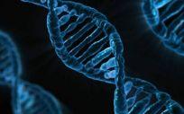 Investigadores han desmotrado que la organización espacial del genoma juega un papel crucial en la expresión de los genes, en el destino de las células.