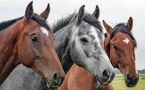 El caballo, aliado de las personas con esclerosis múltiple