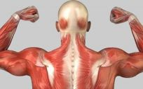 Una nueva técnica de bioimpresión 3D permite reproducir músculos y tendones