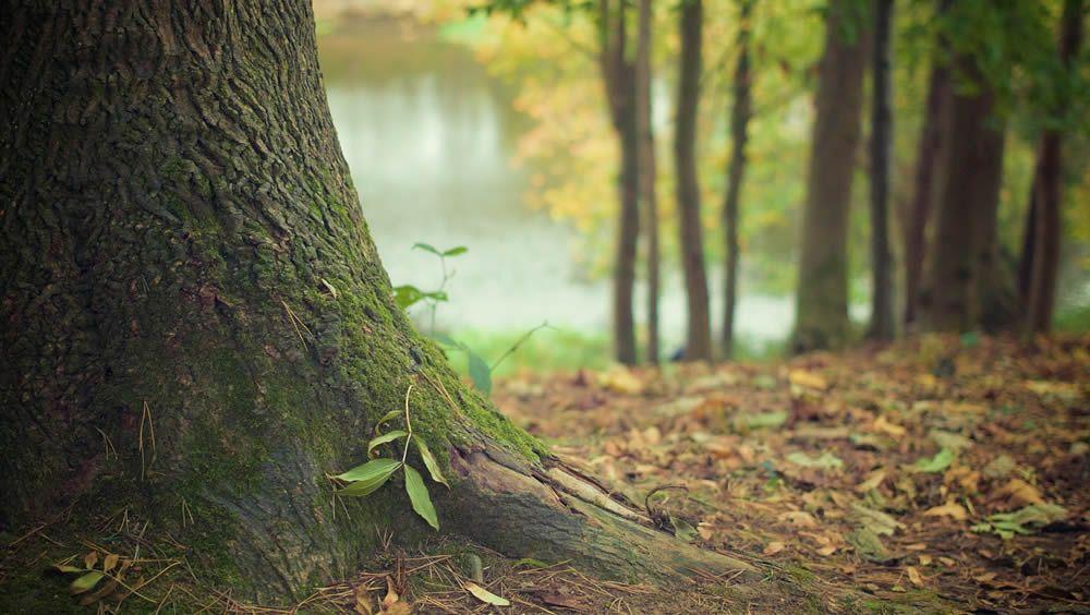 ¿Por qué la naturaleza es buena para la salud?