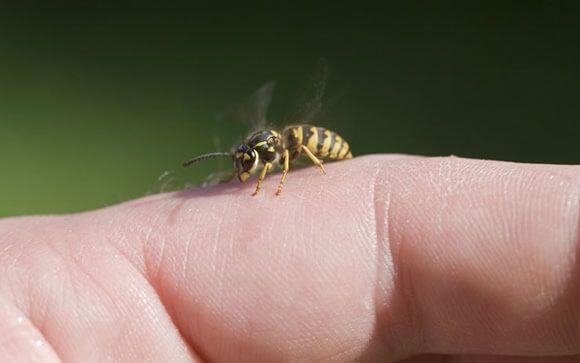 Sabes cómo evitar las picaduras de avispas y abejas?