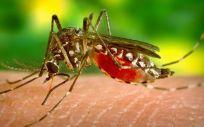 La primera transmisión a humanos de la enfermedad en España fue en 2004.