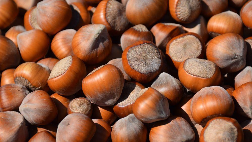 Comer avellanas potencia dos micronutrientes cruciales en los mayores