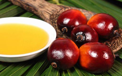 La OMS advierte: la industria del aceite de palma busca influir en la investigación sanitaria