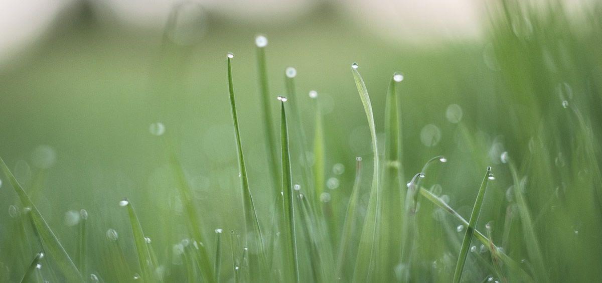 Con la llegada de la primavera, la enfermedad alérgica respiratoria provocada por los ácaros del polvo inicia una de sus temporadas más fuertes, junto al otoño.