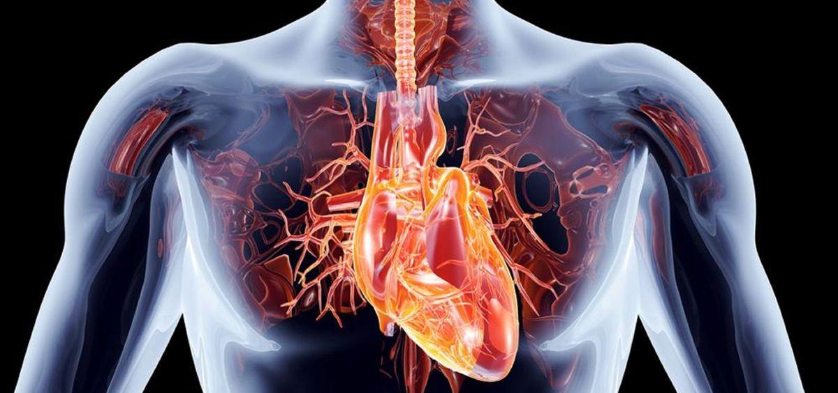Vasos sanguíneos artificiales para predecir el rechazo de los trasplantes